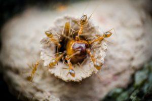 1 ants-4800797_1920
