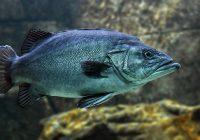 fish-3322230__340