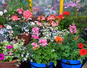 piante fiorite on line