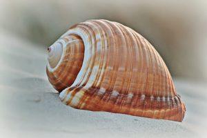 shell-1496269_960_720